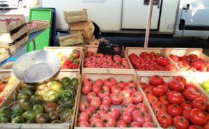 トマト色々の写真