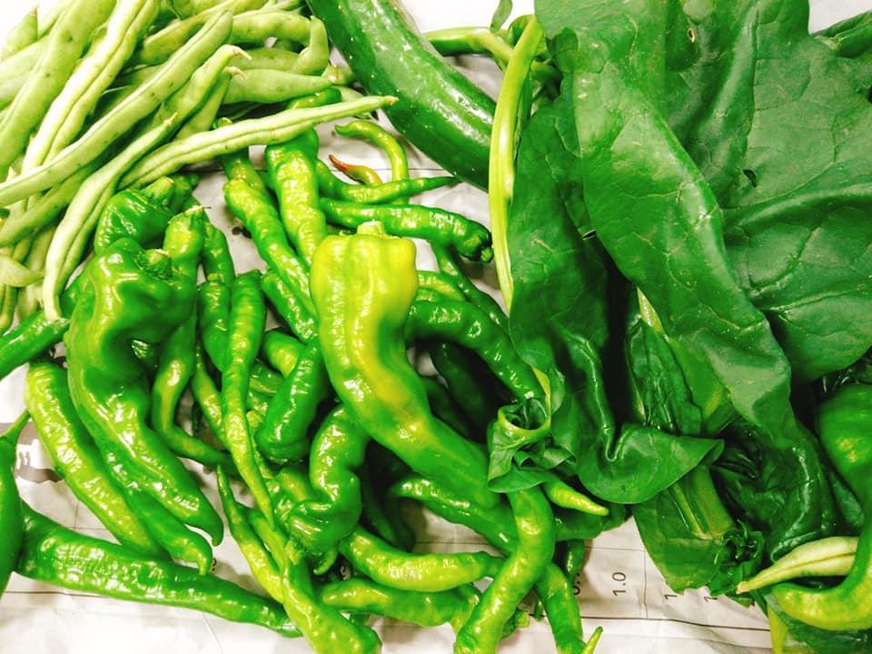 白河総合農園芸科の野菜の写真